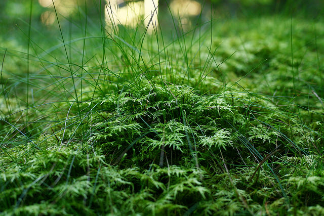 Image of green moss taken with the Canon 50mm STM Lens
